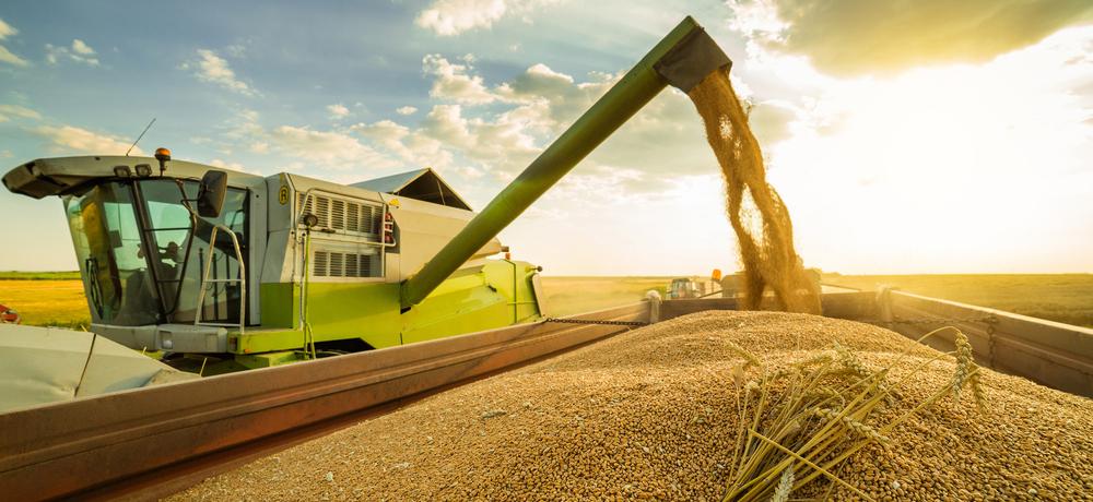 цены на пшеницу