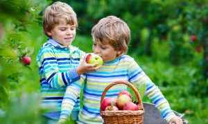 цена на яблоко