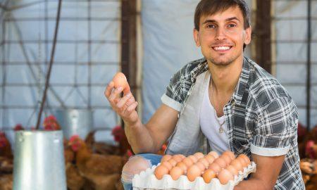 цена на яйца