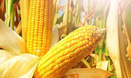 мировой рынок кукурузы