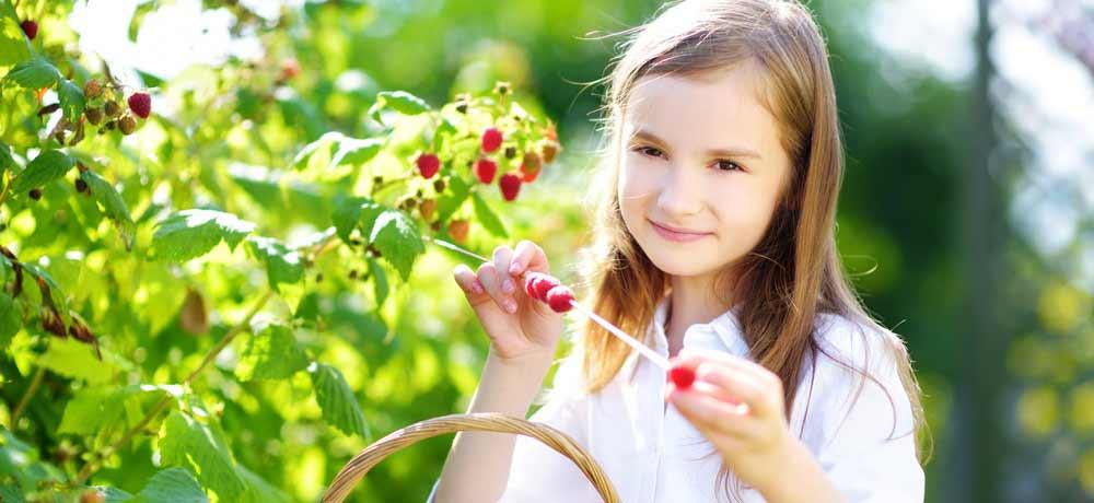 органическое ягодная ферма