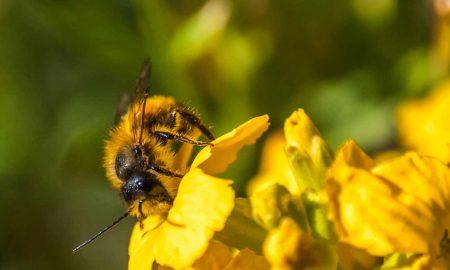 экспорт пчел