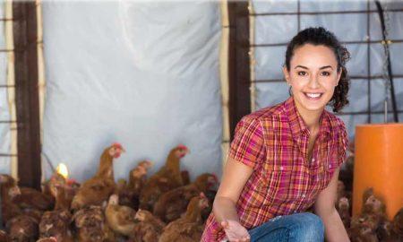 фермерские цыплята