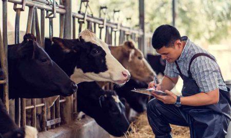как построить молочную ферму