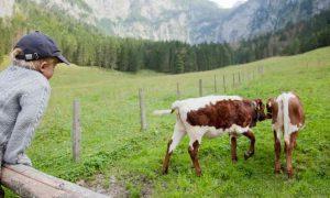 Прогноз развития украинского рынка молока и молокопродуктов в контексте мировых тенденций