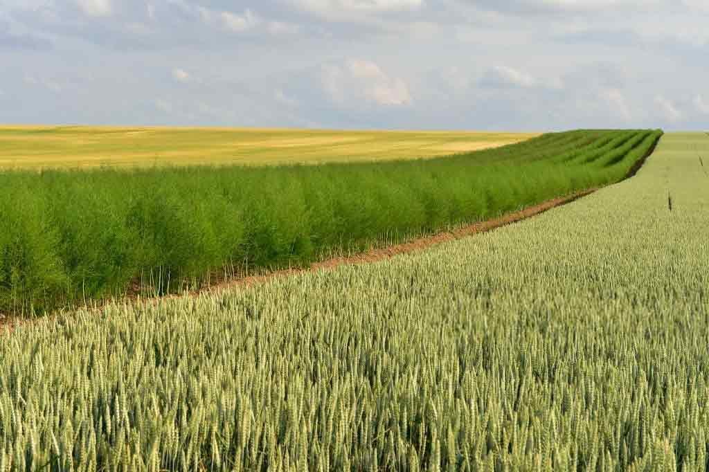 органическая макаронная крупа из твердой пшеницы