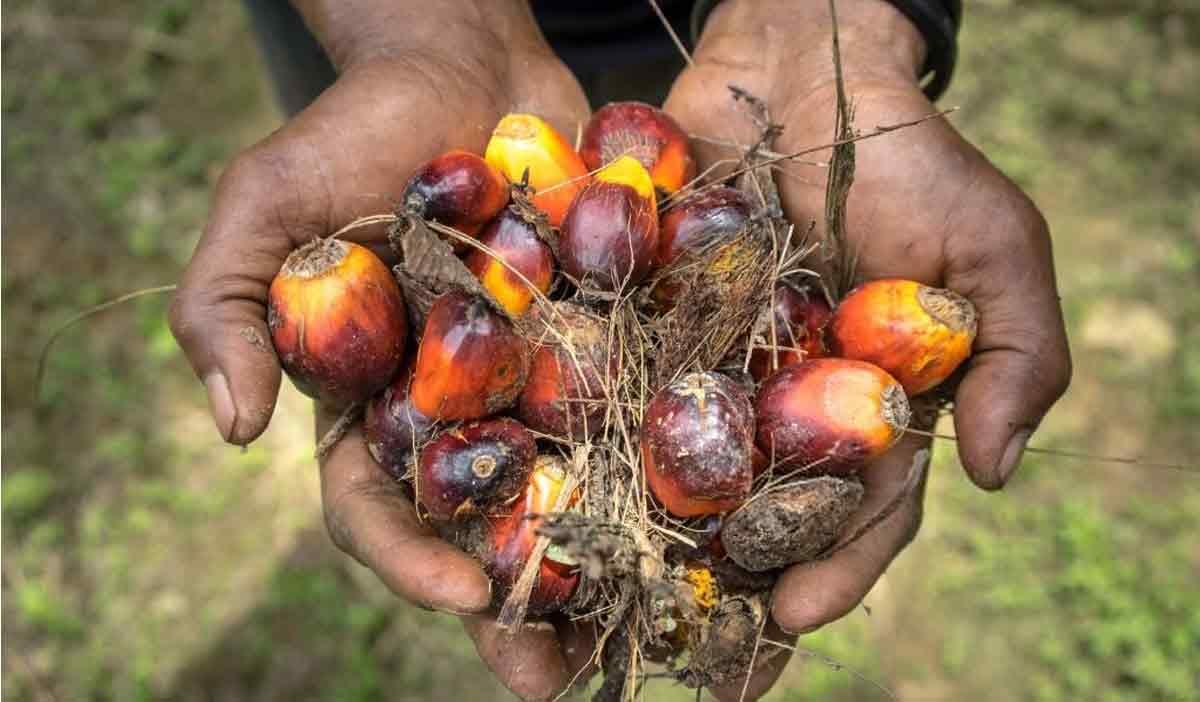 запрет использования пальмового масла