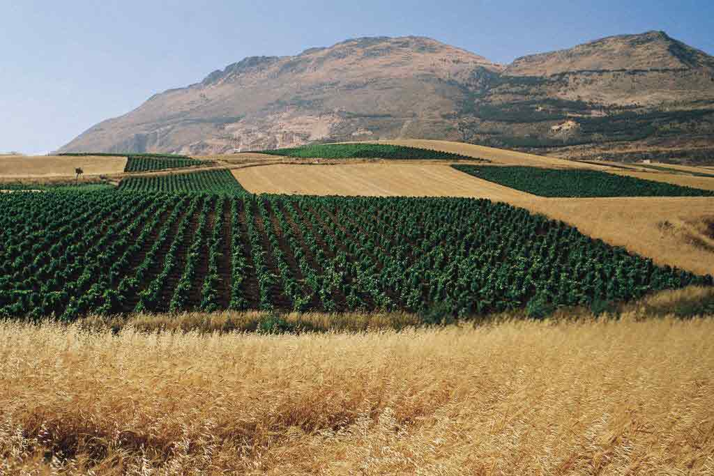 повышение урожайности агрокультур