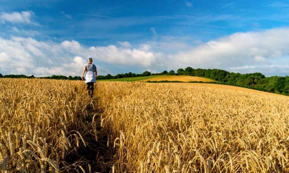 беспошлинные квоты на пшеницу