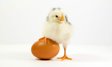 рост экспорта мяса домашней птицы