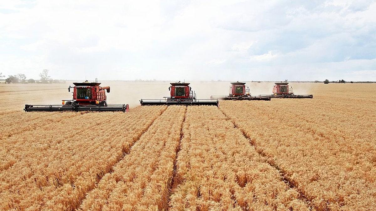 производство зерна