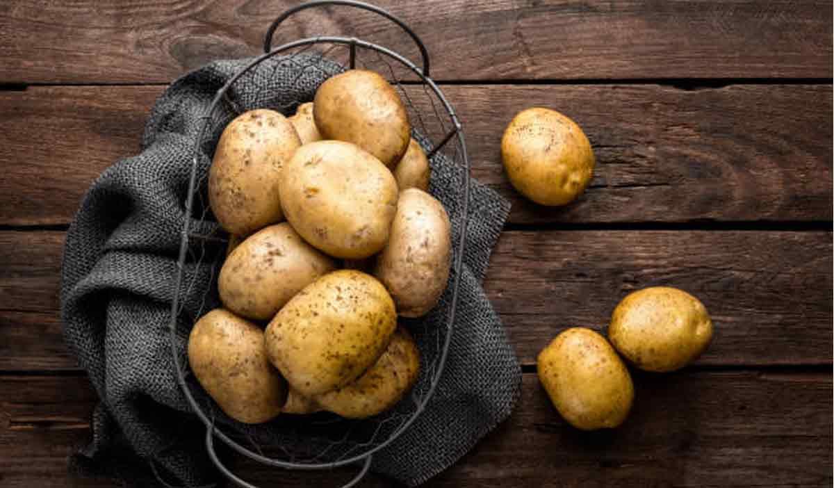картофель 2018 урожай