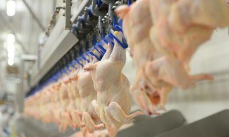 новая торговая марка курятины