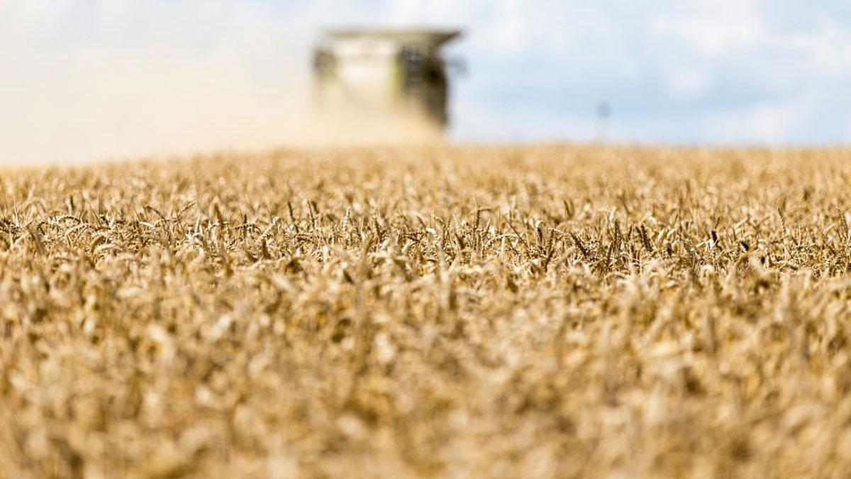 импорт пшеницы