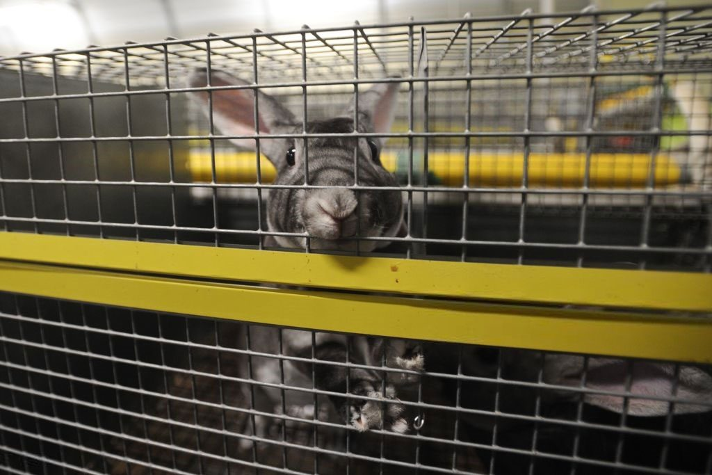 фермерские крольчата