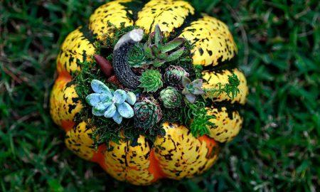 дизайнерские овощи и фрукты