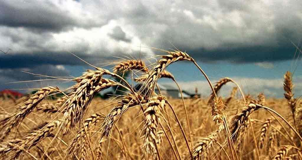 доля в аграрном экспорте