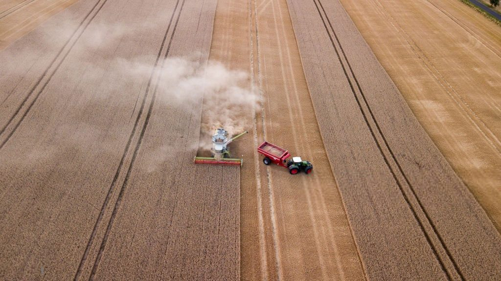 пшеница в индонезию