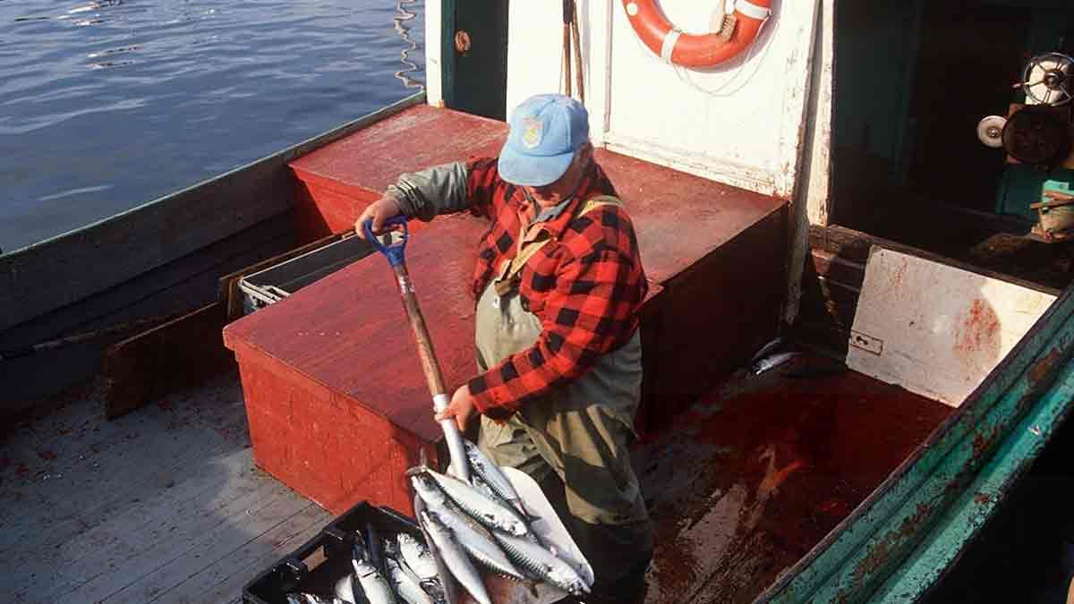 В Укране реформируют рыбную отрасль