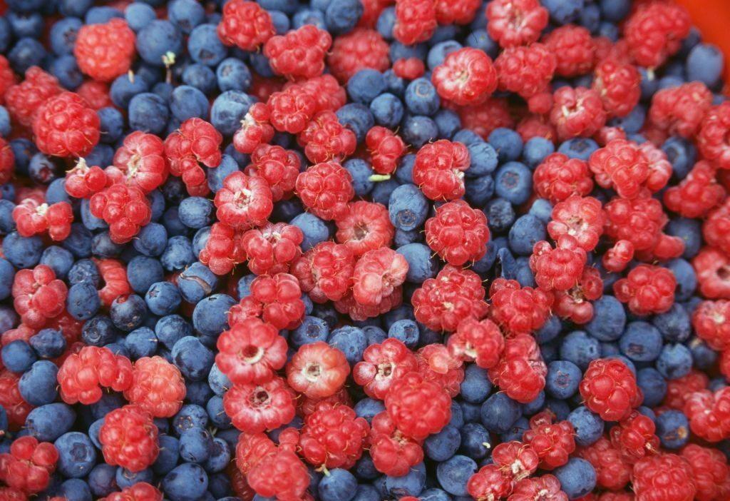 урожай ягод украина