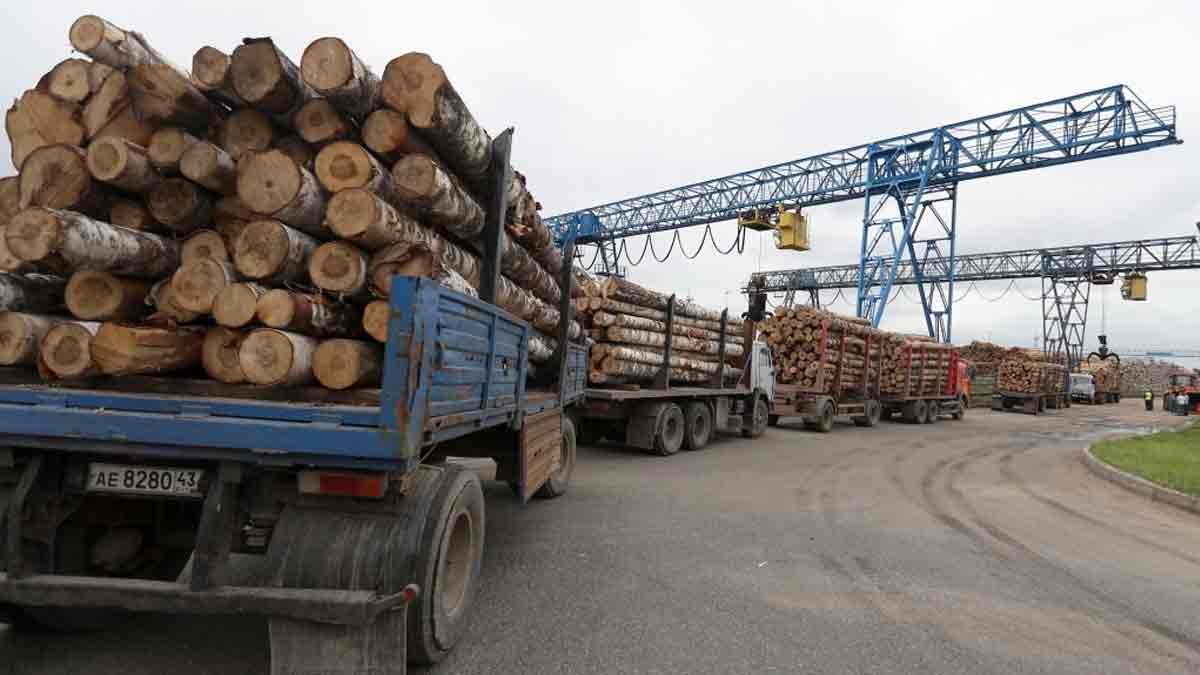 экспорт лесоматериалов под видом дров