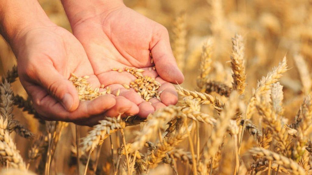 цена хлеб в Украине