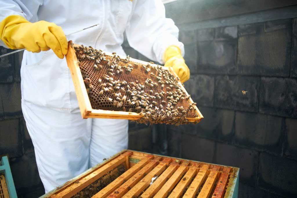 Технология производства продукции пчеловодства