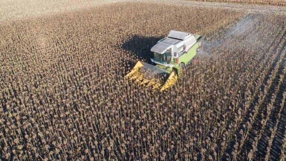 урожайность подсолнечника 2020