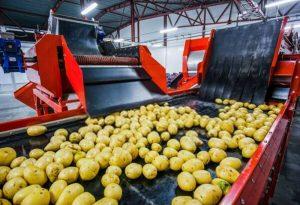 завод по переработке картофеля